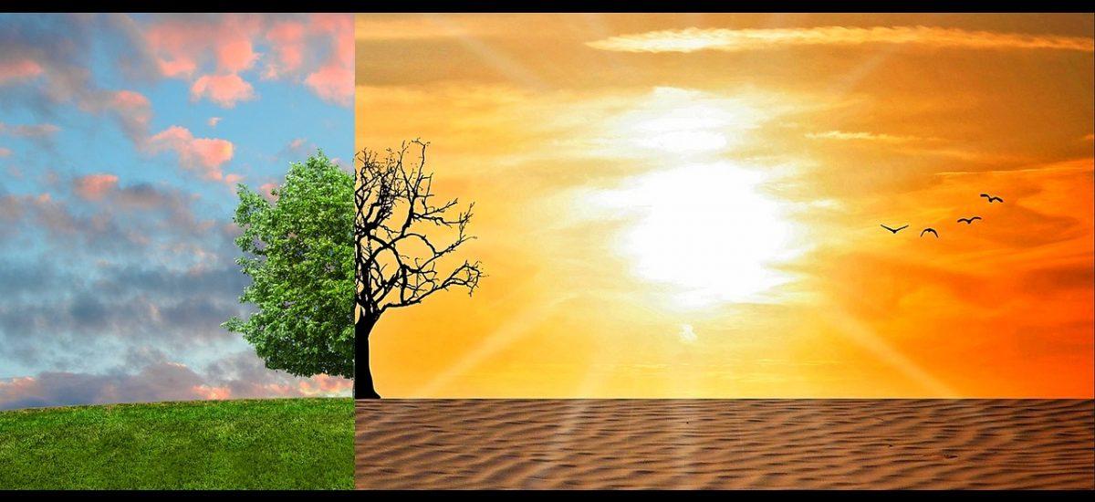 Dret mediambiental o com la llei cuida la Terra